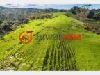 新西兰Dairy Flat的乡郊地产,418 Blackbridge Road,编号34953298