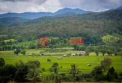 泰国清迈府清道的房产,Tambol Toon Kao Puang,编号36415781