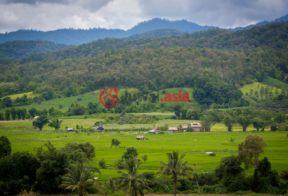 泰国清道总占地292800平方米的土地